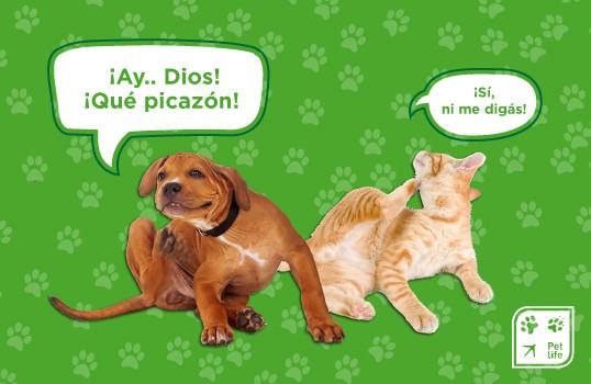 Las ¡ALERGIAS! en Nuestras Mascotas