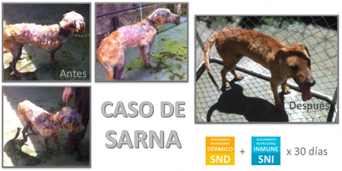Caso de Sarna en Perro Rescatado