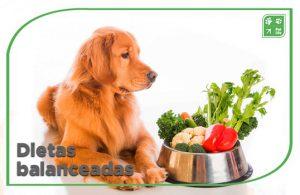 dietas para perros