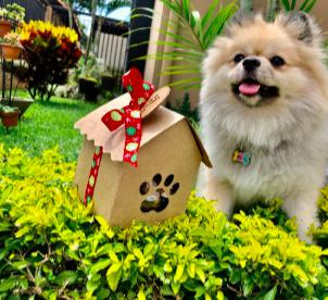 Equipo básico para recibir un nuevo perrito o gatito en casa